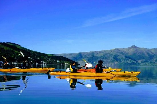 Akaroa Shore Udflugt: Small-Group...