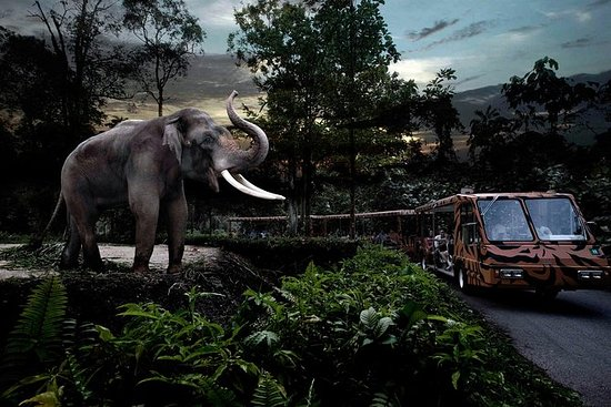 Night Safari Tour i Singapore med...