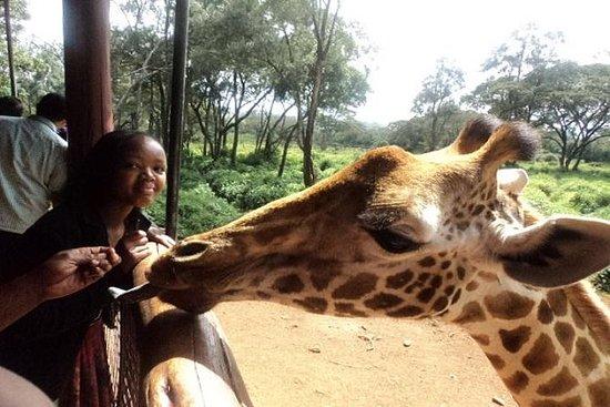 Giraffe Center y Elephant Orphanage...