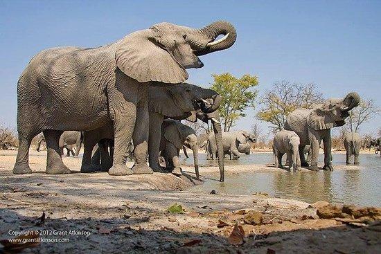 Safari de 2 jours au parc national...