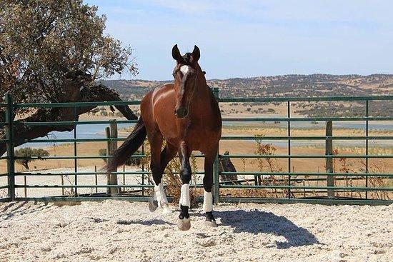 Passeio a cavalo em Alentejo
