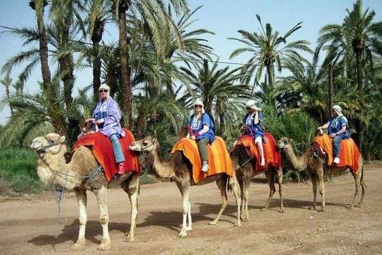 Paseo de medio día en camello por el...