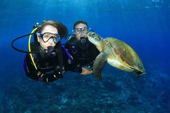 ウェイブ・ブレイク島で、ゴールドコースト・スキューバ・ダイビング体験
