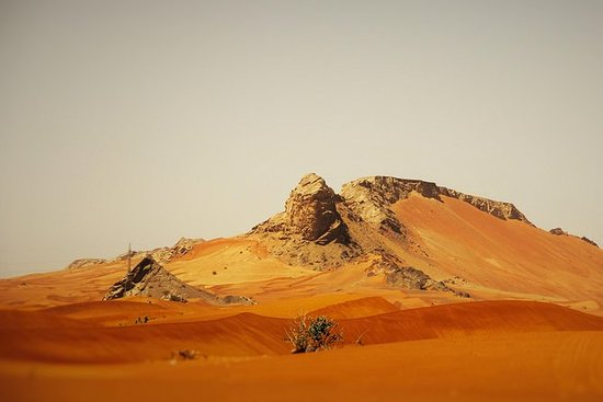 Sharjah Mleiha Desert Half-Day Tour