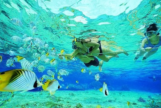 Gold Coast Guided Snorkel with Fish...