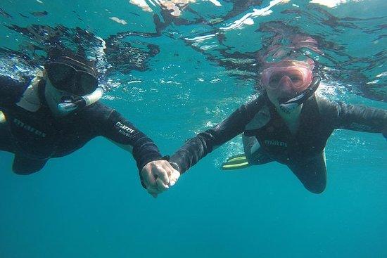 Visite guidée de Tenerife en plongée...