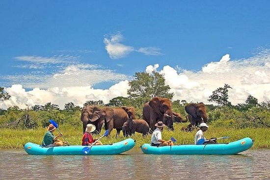 Full-Day Upper Zambezi Canoe Safari...