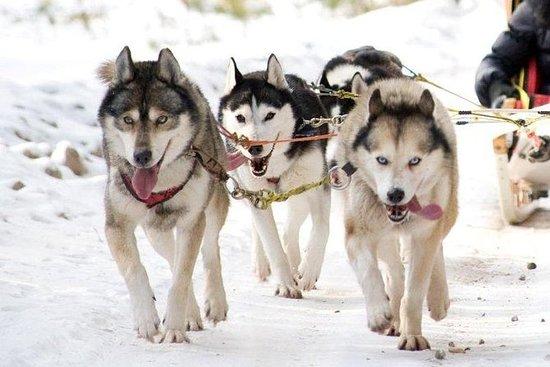 Vilnius Husky hondensleetochten