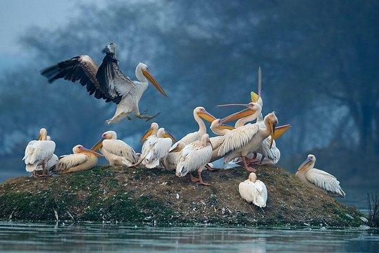 Privat dagstur til Keoladeo Bird...