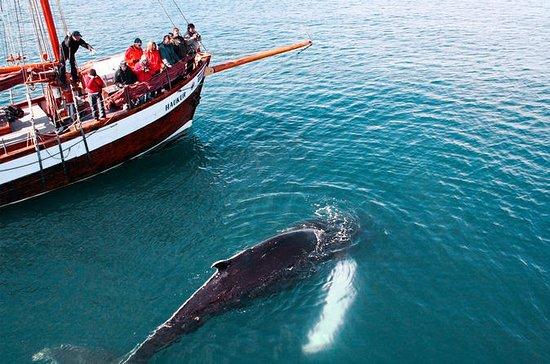 Avistamiento de ballenas a bordo de...