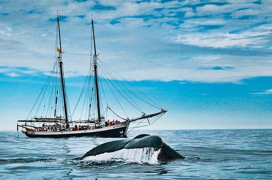 Tour di osservazione delle balene in