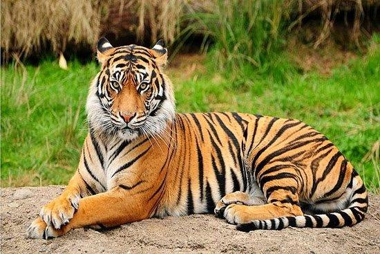 Privat dagstur til Central Zoo på...