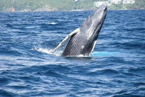 Samana Whale Watching Tour with...