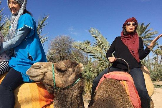 Passeio de camelo no Palm Grove de...