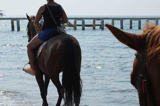 在博德鲁姆骑马