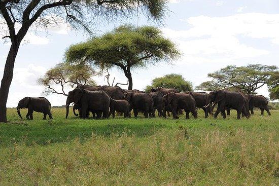 Safari Tarangire de 1 día
