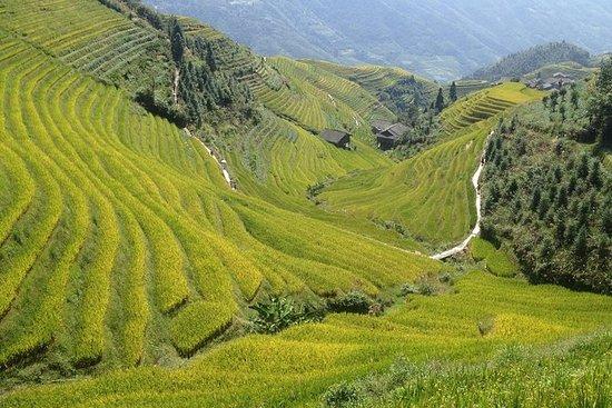 Longji Rice Terrace -- 1 Day Trip