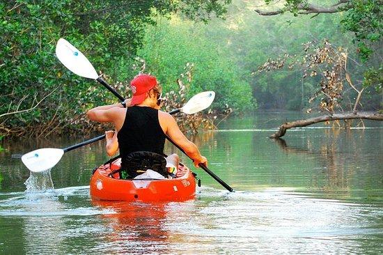 Nosara river guided kayak mangrove...