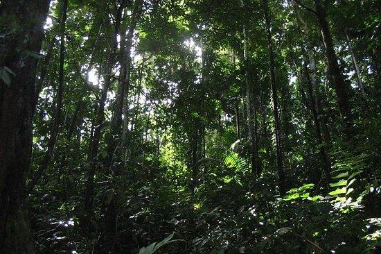 Escursionismo Cahuita da Puerto Viejo
