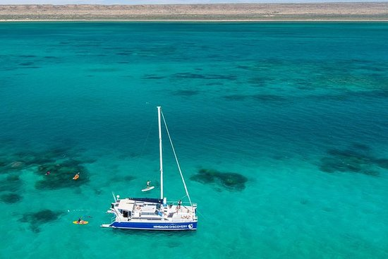 Whale Shark Swim by Catamaran in...