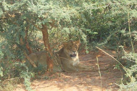 4-tägige Ngorongoro Serengeti...