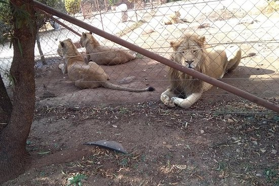 Pillanisburg SAFARI y Lion Park Day...