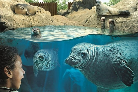 Hunstanton SEA LIFE Sanctuary...