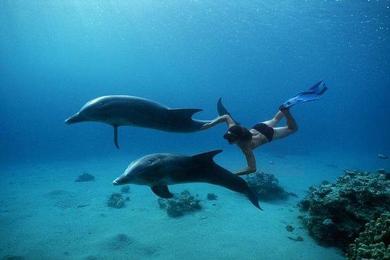 Viagem em casa com golfinhos