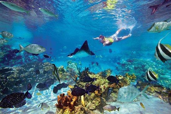 San Juanillo beach snorkel marine...
