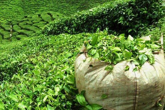 Visite guidée du thé et du sucre de...