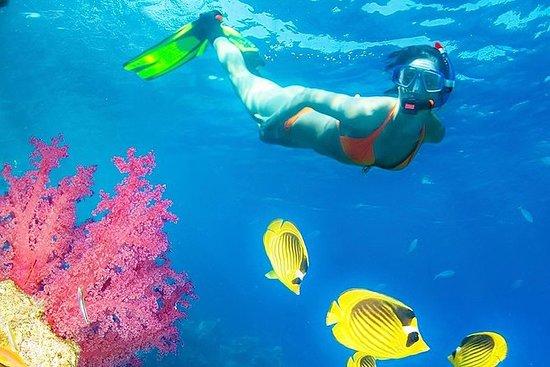 Best Snorkeling in Phuket - Koh Rok...
