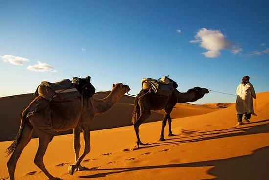 Promenade à dos de chameau à Marrakech
