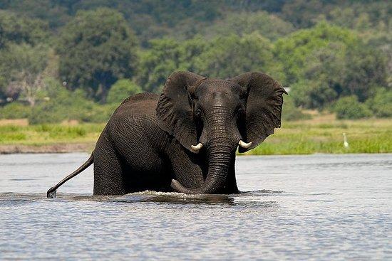 Chobe Full Day Safari Trip
