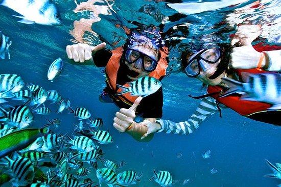 Snorkeling en Koh Tao y la isla de...