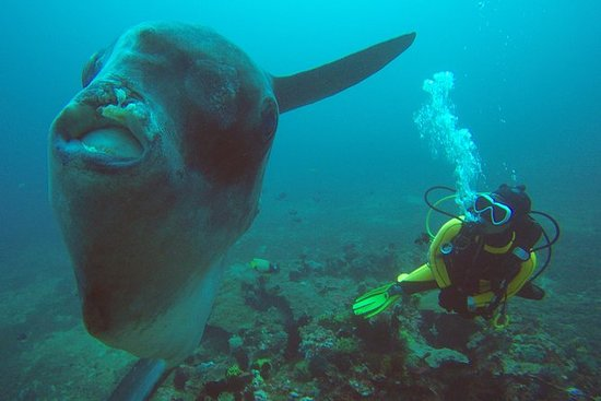 Plongée sous-marine à Gili Mimpang...