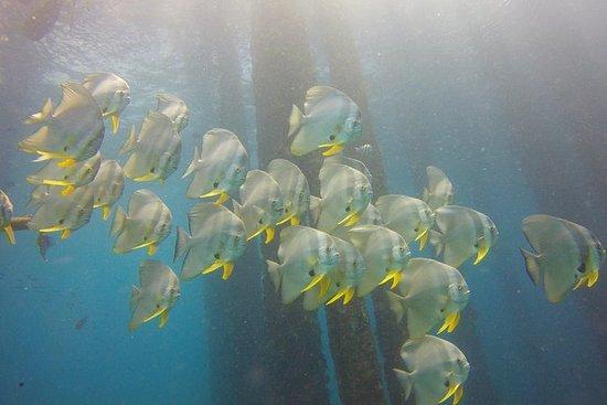 Descubra Mergulho em Padang Bai
