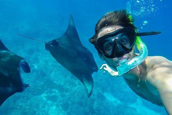 Snorkelling in Nusa Penida - Manta...