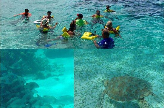 Excursão de Mergulho Hol Hol e Turtle...