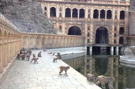 Utflukt til Monkey Temple (Galta Ji...