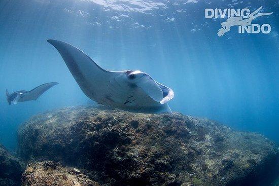 Bali Introductory Scuba Dive at Manta...