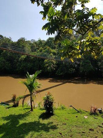 Zdjęcie Batang Duri