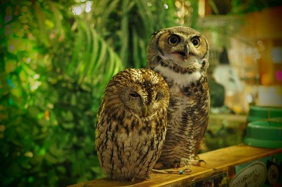 Owl no Mori Asakusa Shinnakamisedori