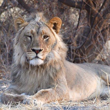 Central Kalahari Game Reserve Foto