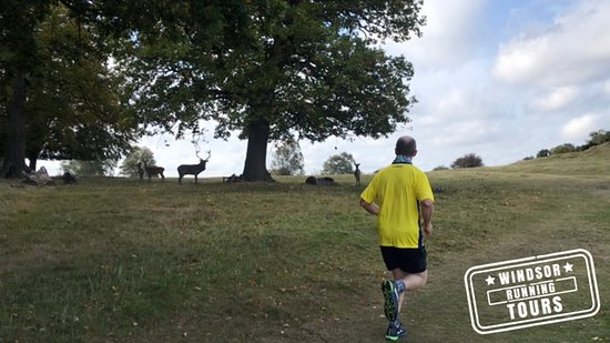 Windsor Running Tours: Keeping the local wildlife at a safe distance, Windsor Great Park, United Kingdom.