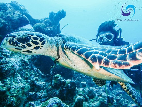 Атолл Лааму: in Laamu Atoll Gan island turtle point is about  20 mints by our speed boat .