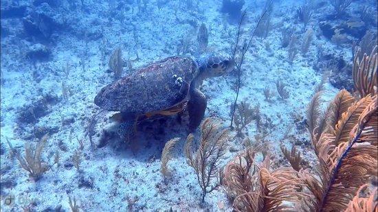 Dive Exuma: Turtle 2