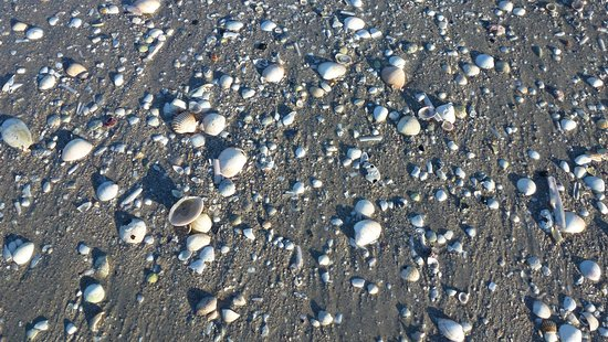 Playa Lagosteira: Le conchiglie.