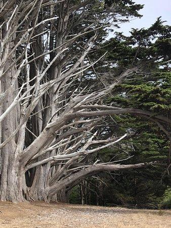Seal Cove Inn Moss Beach Californië Foto S Reviews En Prijsvergelijking Tripadvisor