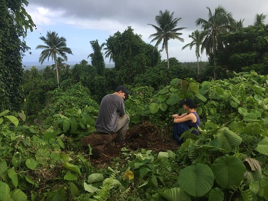 Savai'i, Ilhas Samoa: The mound is completely grown over now, but still sits high amongst the trees.