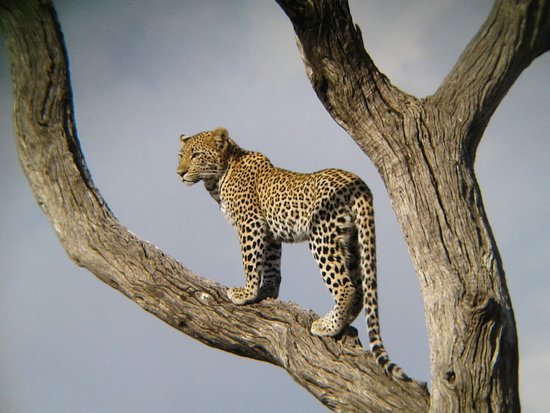 Kruger Africa Safaris